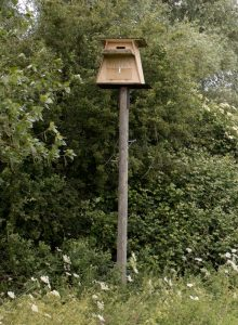 owl box 1